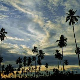 Skyscraper by Rudy Sempur - Landscapes Sunsets & Sunrises ( palm, coconut, sunset, indonesia, cloud, gorontalo )