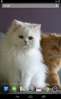Screenshot of Persian Cats Live Wallpaper
