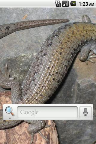 Lizards Live Wallpaper