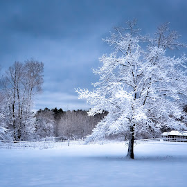 A Winter Standout by Gary Hanson - Landscapes Weather ( winter, snow, white, flock, horse pasture )