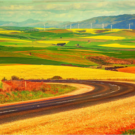 A Spring Patchwork Quilt by Maricha  Knight van Heerden - Landscapes Prairies, Meadows & Fields ( clouds, winding road, green, caledon, canola fields, yellow, windmills, spring )