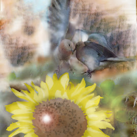 iFred hope...... by Amanda Coertze - Digital Art Abstract ( sunflower, ifred, hope, dove, Hope )