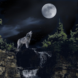 Wolf Howling at the Moon by Leslie Collins - Digital Art Animals ( clouds, moon, wolf, digital art, waterfall, trees, night )