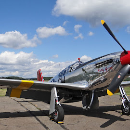 P-51 Mustang by Paul Brady - Transportation Airplanes (  )
