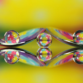 by Dipali S - Artistic Objects Other Objects ( reflection, artistic, sphere, spoon, refraction, flowers )