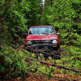 Toyota  by Anderson Lindblom - Transportation Automobiles ( red, pickup, truck, off road, forest, toyota )