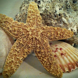 Starfish and Shells by Lettie Maciel - Instagram & Mobile iPhone ( sea shells, shells, starfish, sea, ocean )