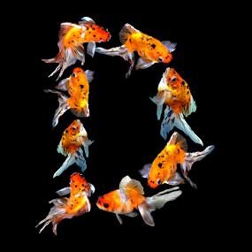 Goldfish D by Janna Morrison - Typography Single Letters ( d )