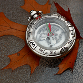 by Dipali S - Artistic Objects Technology Objects ( foliage, oak, direction, fall, traveler, travel, leaf, compass )