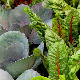 Cabbage and Swiss Chard by Beth Bowman - Nature Up Close Gardens & Produce
