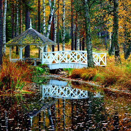 A Place To Rest by Ann Bøhn - Landscapes Forests ( water, leafs, autumn, forest, norway )