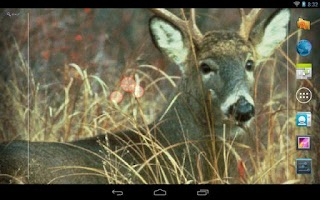 Screenshot of Deer Hunting Live Wallpaper