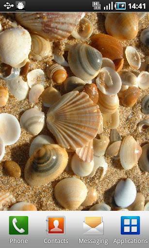 SeashellsWallpaper