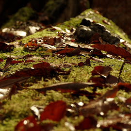 by Michael de Schacht - Nature Up Close Leaves & Grasses