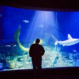 Sea Silouhette by Melissa Weir - Animals Sea Creatures ( animals, underwater, fish, silhouette, shark, stingray )