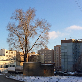 Tree in the city by Vadim Malinovskiy - Instagram & Mobile iPhone