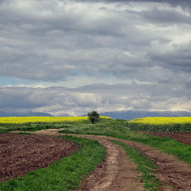After the storm by Dimitar Balyamski - Landscapes Prairies, Meadows & Fields