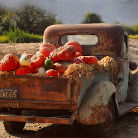 Cornacopia by Kim Spies - Transportation Automobiles (  )
