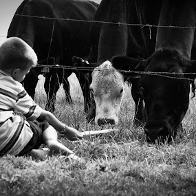 Feeding Time by Lori White - Black & White Portraits & People ( feeding time, son, childhood, summertime, cows )