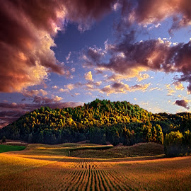 Hidden Valley by Phil Koch - Landscapes Prairies, Meadows & Fields ( vertical, photograph, farmland, yellow, leaves, wicounties, love, sky, tree, nature, weather, flower, follow, orange, twilight, agriculture, horizon, portrait, environment, dawn, serene, trees, floral, natural light, wisconsin, ray, landscape, phil koch, sun, photography, farm, horizons, inspired, clouds, office, park, green, scenic, morning, shadows, farming, wild flowers, field, red, fog, blue, sunset, peace, meadow, crops, landscapephotography, summer, beam, earth, harvest, sunrise, landscapes, mist,  )