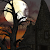Halloween Live Wallpaper FREE file APK for Gaming PC/PS3/PS4 Smart TV