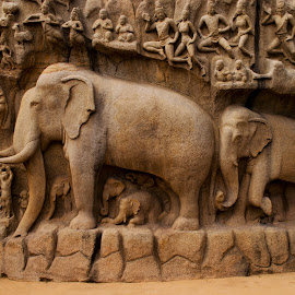 mahabalipuram by Nitish Saini - Buildings & Architecture Statues & Monuments ( elephants, old, mountain, rock carving, carvings, statues, centuries, india, monument, architecture, chennai )