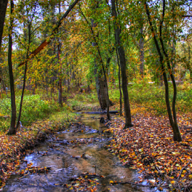 by Dipali S - Landscapes Forests ( water, tress, nature, colorful, color, autumn )