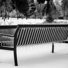 By the River by Victoria Wozniak - Artistic Objects Furniture ( winter, canada, bench, black and white, ice, snow, white, snowy, ontario, icicle, black, river )