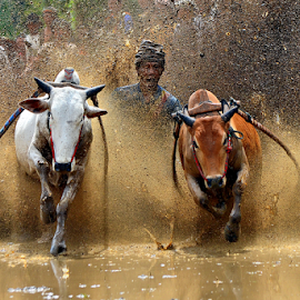 Yihaaa... by Alhas Kasidatur Ridhwan - Sports & Fitness Rodeo/Bull Riding