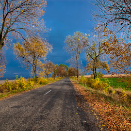 autumn on the road by Ionel Covariuc - Landscapes Weather ( picture, color, autumn, fall, road, landscape )