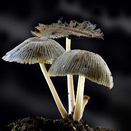 by ML Sah - Nature Up Close Mushrooms & Fungi