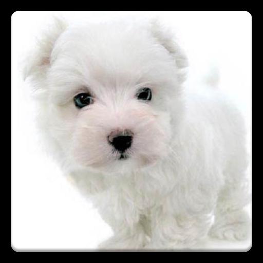 狗的照片! 娛樂 App LOGO-APP試玩