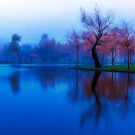 Blue Morning by Constantinescu Adrian Radu - City,  Street & Park  City Parks