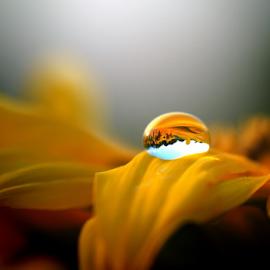 by Flórián Katona - Nature Up Close Water