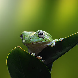 ^^ looking around ^^ by Andri Priyadi - Animals Amphibians