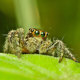 by Azmi Bin Awang Azmi - Animals Insects & Spiders