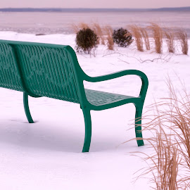 Bench and Grass In Snow by Alan Roseman - Artistic Objects Furniture ( cars in snow, february, new england, rhode island, snow, narragansett bay, lawn chairs,  )
