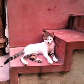 cat on step by Indrajit Pal - Animals - Cats Portraits (  )
