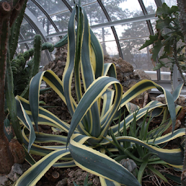 Krohn Conservatory by Darrell Tenpenny - Nature Up Close Other plants
