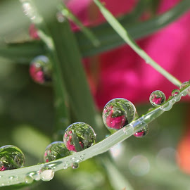 Mean To Me by Lala Fuad - Nature Up Close Natural Waterdrops