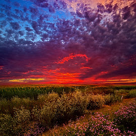 Left With The Memories by Phil Koch - Landscapes Prairies, Meadows & Fields ( field, nature, twilight, farming )