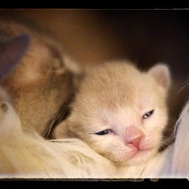 I love my mom by Krista Nurmi - Animals - Cats Kittens