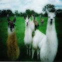 Llamas alpacas Sound Effects icon