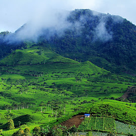 by Edy Herwansyah Jr. - Landscapes Mountains & Hills