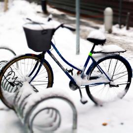 Left in the snow... by Nenad Šimunić - Transportation Bicycles