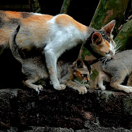 Mom with her youngs by Rupam Sarma - Animals - Cats Kittens
