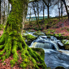 Moss Tree Ireland by Sara Chase - Landscapes Forests