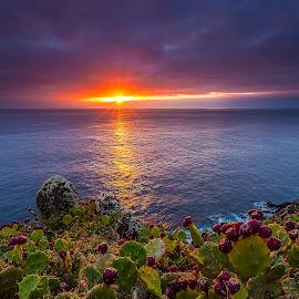 sweet thorns by Manuel Oliveira - Landscapes Sunsets & Sunrises ( canon, sunset, portugal, landscape, azores )