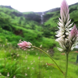 by Sahil Panicker - Nature Up Close Gardens & Produce ( instalike, instamood, likes, nature, macro, panvel, green, mountains, waterfall, flower, epicday, oneofthebestmomentsofmylife, instalove, instacrazy )