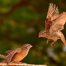 by Irena Perkušić - Animals Birds (  )